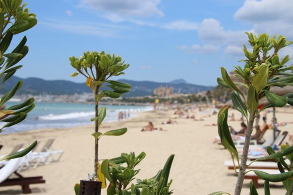 Beach Club Mallorca